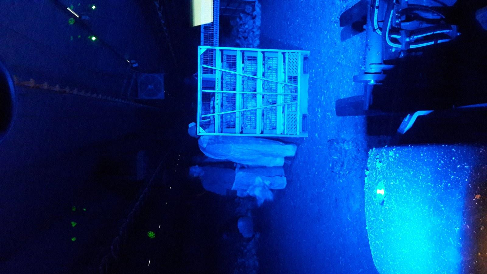 Lampen En Licht : Meer licht tijdens laden met blauwe led lampen pluimveeweb